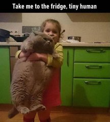 Take me to the fridge, tiny human!