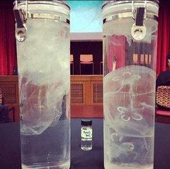 Jellyfish vs plastic bags