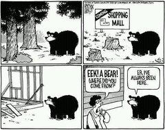 The bear was there first